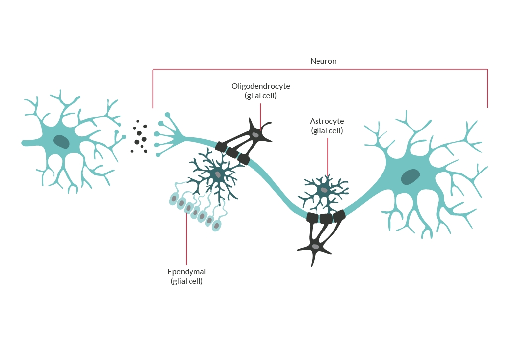 a graphic diagram of a brain cell neuron