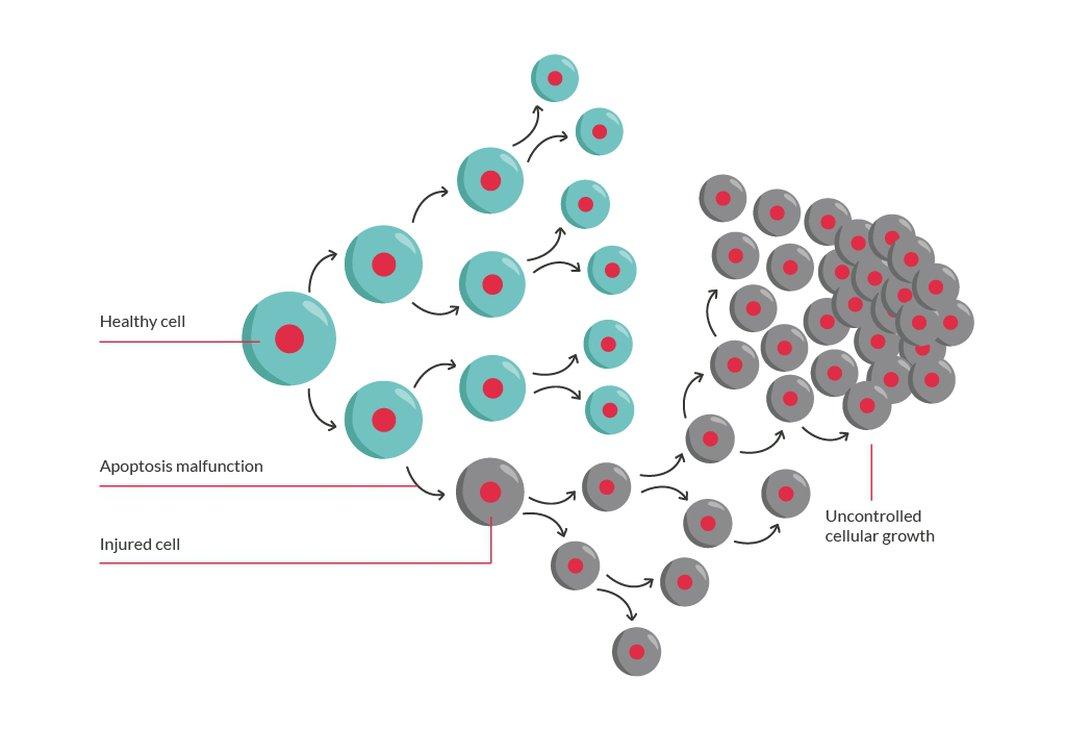 Brain cells | The Brain Tumour Charity
