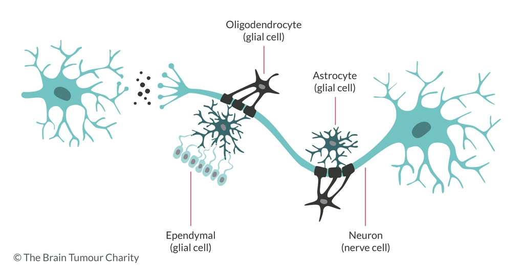 Graphic of brain cell structure showing glial cells and nerve cells